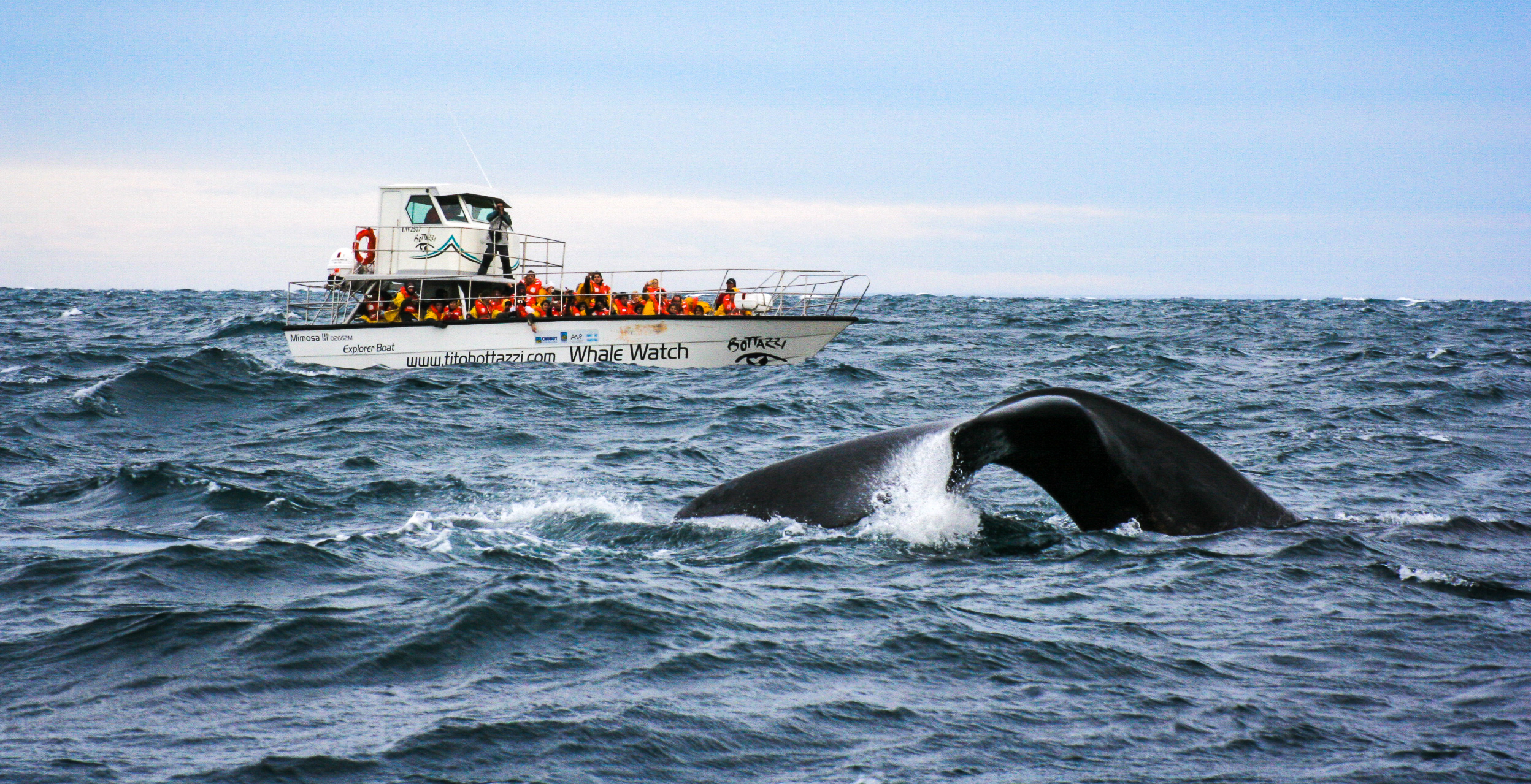 Good reasons to not kill whales