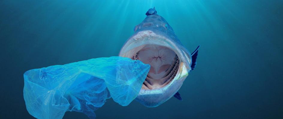 plastic is harming marine life