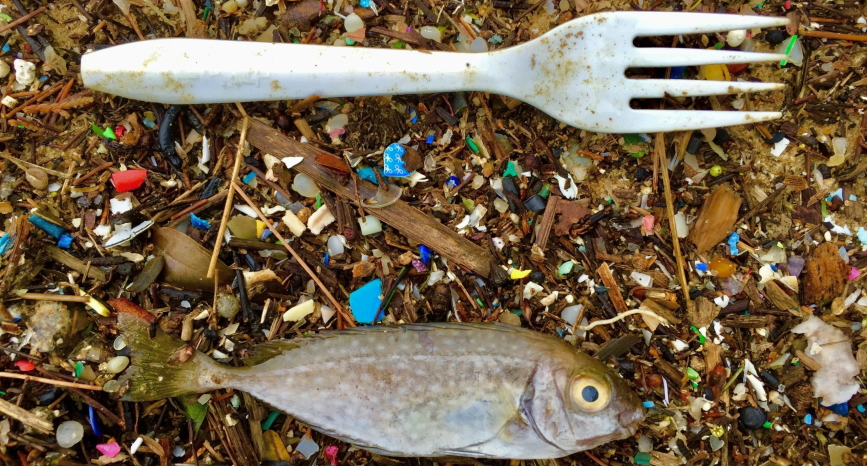 Knowledge of microplastics in fish and fishmeal
