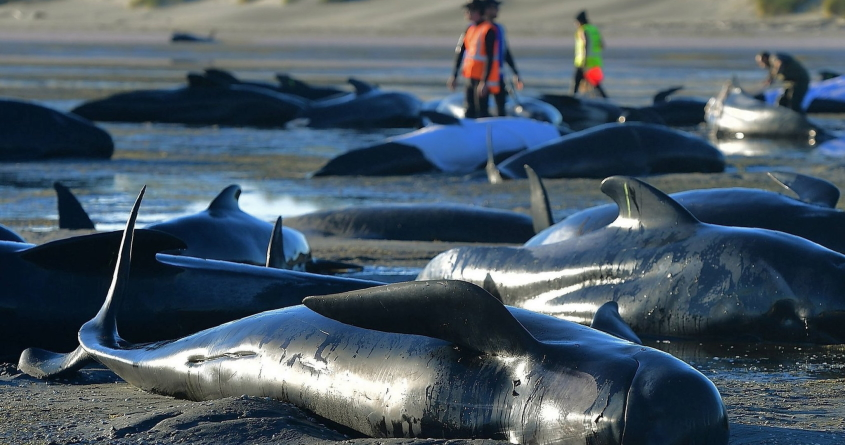 What are the causes of whale stranding?